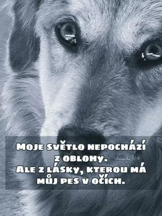 Motto, Live Life, Animals And Pets, Texts, Best Friends, Humor, Motivation, Dogs, Quotes