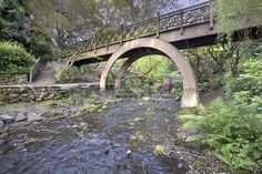 Steps to the the Wooden Bridge Arches at Crystal Springs Rhododendron Garden Stock Photo - 19380836