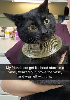 Hilarious Cat Snapchats dump - Album on Imgur