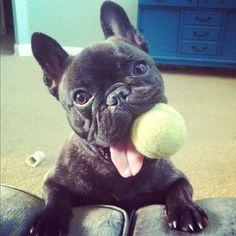 Fofão com bolinha de tenis na sua boca!
