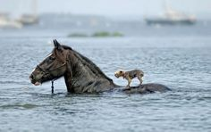 This horse helped save this dog during a flood. And people think animals don't have souls or aren't that intelligent!