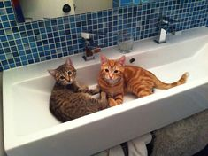 This is the sink I want for my bathroom, ( minus the kittens, lol)
