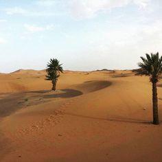 Palm trees and sand dunes...I think Little Prince should be around here...somewhere... #moroccoobjectif #palmtrees #sanddunes #cameltrek #merzouga #ergchebbi #ergchigaga #travel #explore #aroundtheworld #happylife #berber #nomad #amazigh #nomadiclife #maroc #landscapes #morocco #marruecos #marocco #marroc #marrocos #marokko #maroko Morocco Desert Tours Marrakech desert Trips