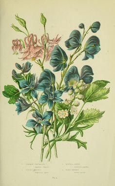 The flowering plants, grasses, sedges, & ferns of Great Britain.