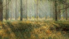 Roomstyler.com - Forest Painting, Design, Painting Art, Paintings, Painted Canvas, Drawings