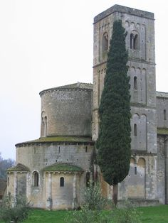 The famous cypress tree competing with the bell tower at Sant'Antimo abbey - Montalcino