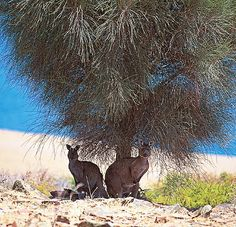 Wildlife on Kangaroo Island - True Wildlife in the Wild!