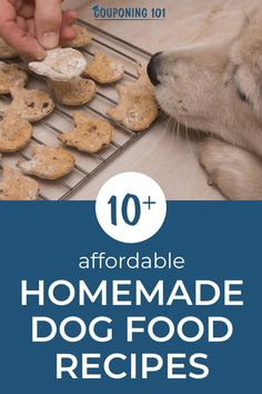why not make them some delicious food and treats with safe ingredients you can find in your pantry? These recipes are affordable, nutritionally balanced, and often healthier than what you can purchase in the stores. Dog Safe Cake Recipe, Meat Cake, Banana Oatmeal Cookies, Sweet Potato Muffins, Organic Peanut Butter, Dog Bakery, Save On Foods, Homemade Dog Food, Dog Food Recipes