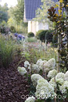 Ogród z lustrem - strona 314 - Forum ogrodnicze - Ogrodowisko
