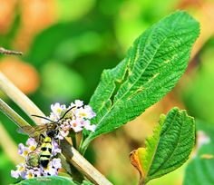 "Olhares do avesso: Alamandas (miniconto) – Rafael Belo ""Mas mais mesmo como a picada da vespa, popular marimbondo, provoca o tombo."" ""But even more as the wasp sting, wasp popular causes the fall."" #Conto #perfume #chuva #tale #scent #rain #故事 #香味 #雨 #कथा #खुशबू #बारिश #cuento #aroma #lluvia #Сказка #запах #дождь #parfum #pluie #conte"