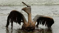 """Trump Made It Easier for Oil Companies to Get Away With Killing Migratory Birds. """"This administration is selling out birdsfor industry."""""""