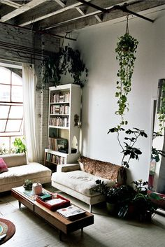 low coffee table + ceiling plants