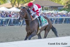 Lauded all week as the toughest field that Rick Porter's undefeated Songbird had yet faced, the G1 Cotillion proved facile for the sophomore daughter of Medaglia d'Oro as she glided to her 11th career victory under another hand ride from Mike Smith. Trained by Jerry Hollendorfer, Songbird covered the 1 1/16 miles over the fast …