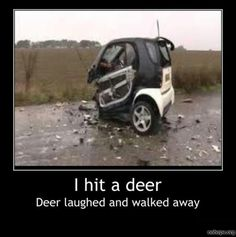 I hit a deer - deer laughed and walked away.  Environmentally friendly transportation