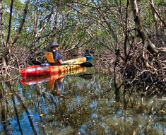 Kayaking through a mangrove tunnel in FL with Ben and Sam.  Incredible experience that ranks amongst the top 10 in my life!