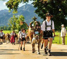 Nach rund 100 Tagen auf Bergeshöh beginnt der Alpabtrieb, dessen Höhepunkt die Viehscheide in Oberstdorf und Schöllang sind.