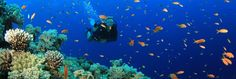 Deep Seer Diving