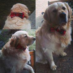 Dakujem @funky_dog_bow_ties :) #goldenretriever #hugo #dogsofinstagram #dogbowtie #redandwhite #ilovemydog #handsome #doggie by 0radka0