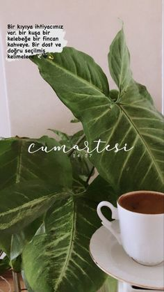 Coffee Break, Coffee Time, Coffee Pictures, Graduation Party Invitations, Story Instagram, Coffee And Books, Bookstagram, Cool Words, Plant Leaves