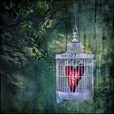 Bird Cage and Heart ...