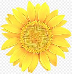 Transparent Sunflower Bdkf8 The Post Transparent Sunflower Bdkf8 Appeared First On Free High Definition Png Di 2020