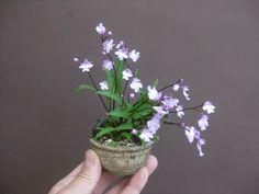 Very small Flowering Bonsai