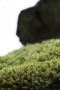 Moss (苔)