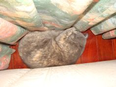 """ahhh quiet time I""""m sure, No one will find me here uuumm"""