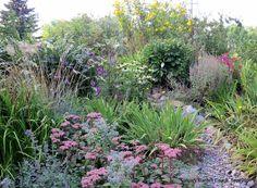 Zone 3 gardening -purple liatris, echinacea 'White Swam', rudbecia 'Golden Glow', sedum 'Matrona' and annual borage