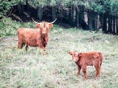 Alpe-Adria-Trail Goats, Trail, Animals, Day Off, Dog Food, Hiking, Animales, Animaux, Animais