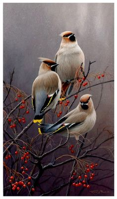 All images are the original artwork of nature artist and wildlife artist Dr. Jeremy Paul and are protected by international copyright laws. Wildlife Paintings, Wildlife Art, Animal Paintings, Bird Paintings, Pretty Birds, Beautiful Birds, Photo Animaliere, Robin Bird, Bird Illustration