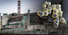 The walls at Chernobyl are being covered by a strange fungus that actually eats and grows on radiation. In the reactors at the Chernobyl nuclear Chernobyl Reactor, Nuclear Reactor, Chernobyl 1986, Chernobyl Disaster, Bora Bora, Tahiti, Types Of Fungi, Chernobyl Nuclear Power Plant, Energy Harvesting