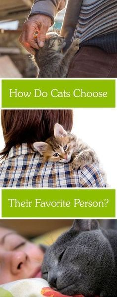 Cat Care Health Does your cat have a favorite person? Crazy Cats, I Love Cats, Cool Cats, Kittens Cutest, Cats And Kittens, Cats Bus, Cat Hacks, Gatos Cats, Cat Behavior