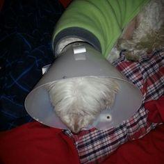 Aquí já estava muito doente com o maldito linfoma cutâneo que tirou sua vida !!!♥