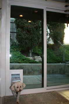How to install a dog door in a glass door read more httpwww sliding glass door doggie door diy project of insert parts planetlyrics Gallery