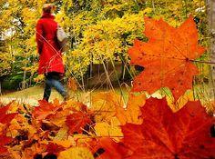 SPIRITUAL HARMONY ΠΝΕΥΜΑΤΙΚΗ ΑΡΜΟΝΙΑ: Η φθινοπωρινή πραγματικότητα Flowers, Plants, Blog, Blogging, Plant, Royal Icing Flowers, Flower, Florals, Floral