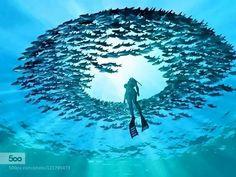 socialfoto:  ocean by a13579024 #SocialFoto   #aqua #diving #scuba divingおぉ...美すぃ~