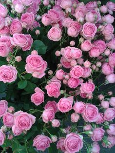 Imagine a river of pink roses. Different Flowers, Types Of Flowers, All Flowers, Flowers Nature, My Flower, Colorful Flowers, Beautiful Pink Roses, Rose Vase, David Austin Roses