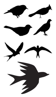 Bird Plate Wall Vinyls Design And Bird Silhouette