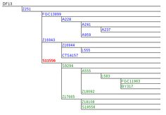 R1b-Z251 Panel (including 251-11EE subclades), YSEQ DNA Shop Dna, Bar Chart, Shopping