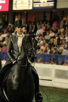 The Mighty Mouse...American Saddlebred