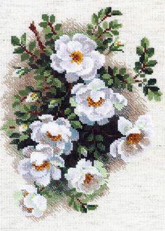 Скачать Вышивка «Белый шиповник» бесплатно. А также другие схемы вышивок в разделах: Ruže, Riolis, Kvety