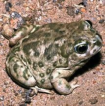 Friday Night with Frogs and Toads San Juan Capistrano, CA #Kids #Events