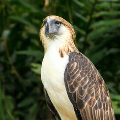 Eagle Images, Eagle Pictures, Philippine Eagle, Davao, Where To Go, Free Images, Dating Tips, Places, Budget
