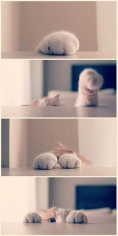 The Funny Side Of Cat Paws (Memes And Photos) - World's largest collection of cat memes and other animals Cute Baby Cats, Cute Cat Gif, Cute Cats And Kittens, Cute Little Animals, Cute Funny Animals, Kittens Cutest, Beautiful Cats, Animals Beautiful, Cat Paws