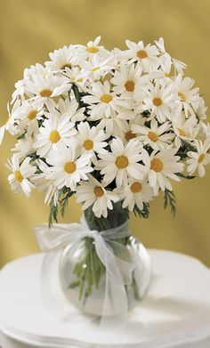 Daisy Vase-A beautifully sunny gift. Over three dozen cheery white daisies bring a bright day to someone special. Arranged in a glass vase, this sweet bouquet will be welcome for any occasion. Happy Flowers, Summer Flowers, Fresh Flowers, Beautiful Flowers, Simple Flowers, Cut Flowers, Daisy Centerpieces, Table Centerpieces, Centerpiece Flowers