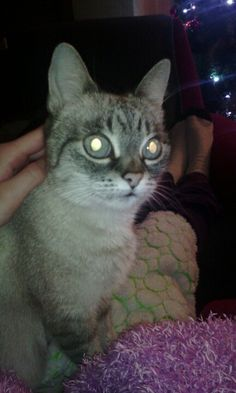 #Kitty#MineCat#LoveCat