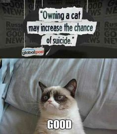 Owning a cat may increase the chance of suicide