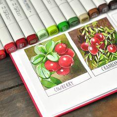 Copic Marker Art, Copic Art, Copic Sketch Markers, Watercolor Sketchbook, Art Sketchbook, Watercolor Art, Botanical Art, Botanical Illustration, Copic Markers Tutorial