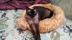 Lulú on her bed.